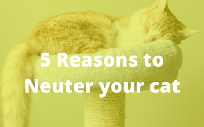 How Neutering Benefits Owners and Cats