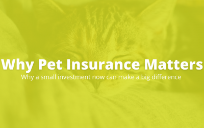 The Importance of Pet Insurance for your Cat